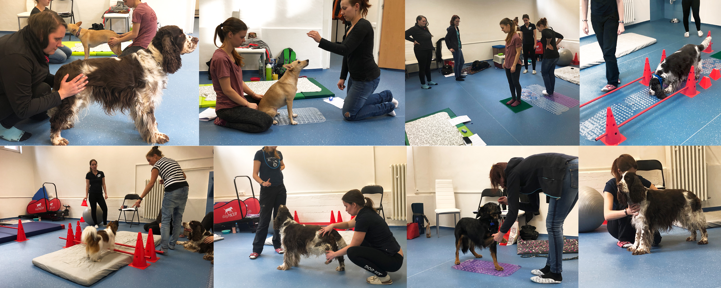 """Aktivní senzomotorické cvičení pro psy """"System by AQUA-DOG"""""""